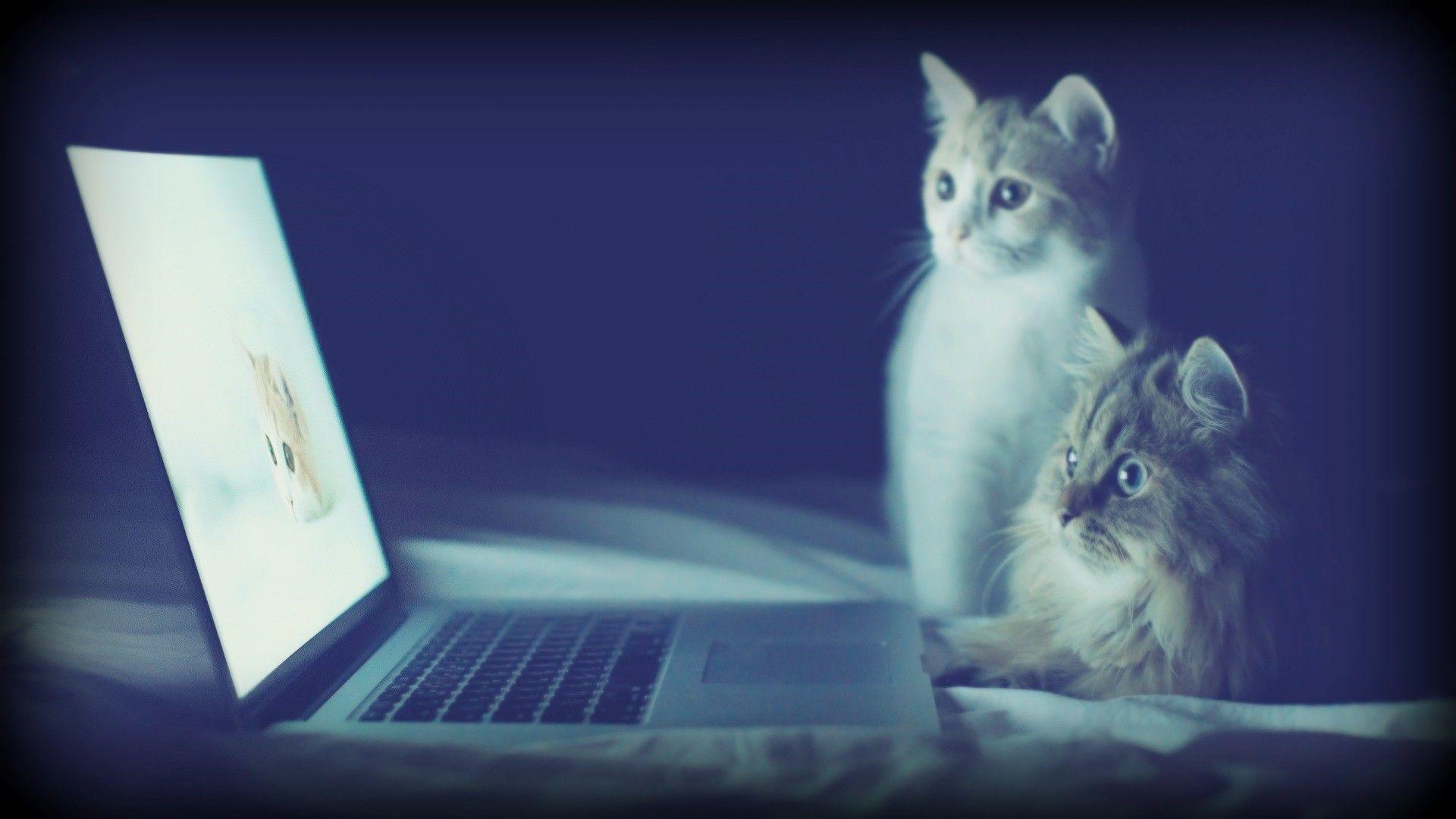 Tendencia de Vídeo Online