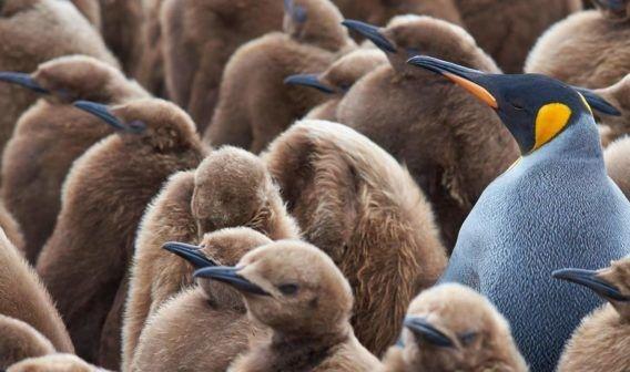 pingüino publicidad nativa